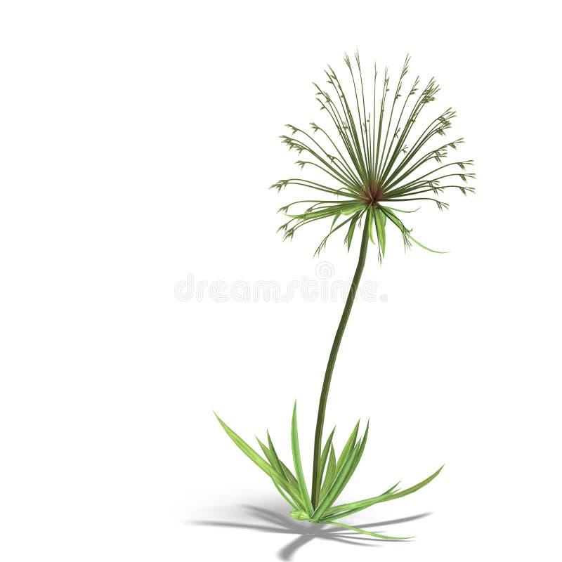 Download Papyrus stock illustration. Illustration of green, leaved - 9763385