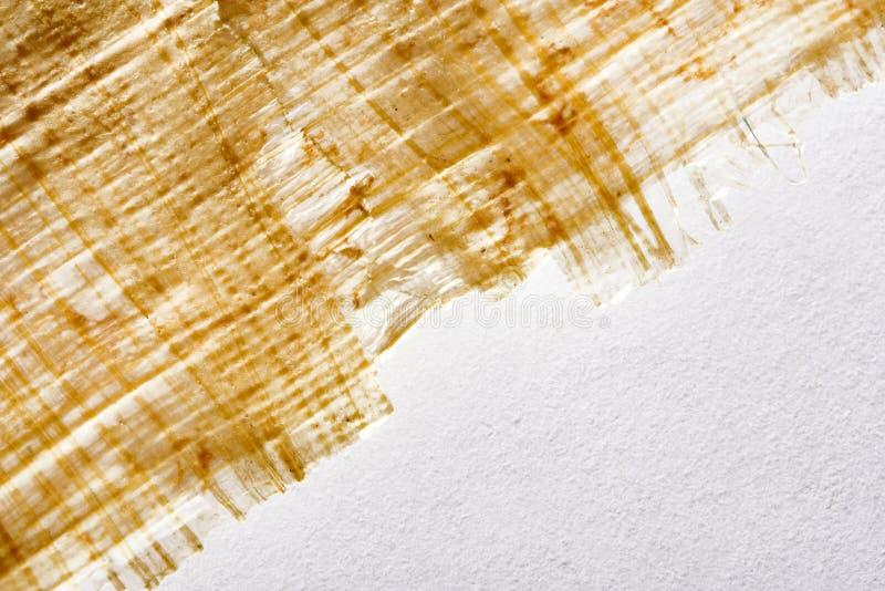 Papyrus på bakgrunden arkivfoto