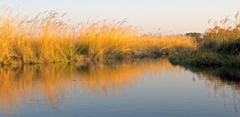 Papyrusgras auf dem Wasser stockfoto
