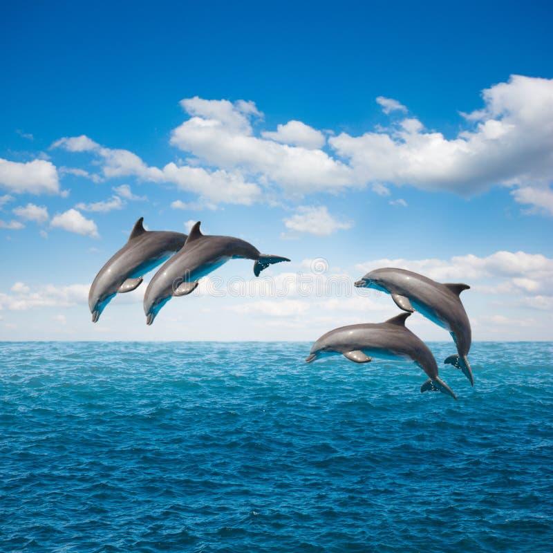 Paquet de dauphins sautants