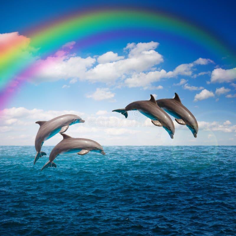Paquet de dauphins sautants images stock