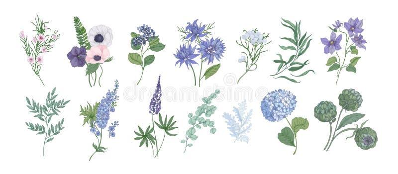 Paquet de dessins détaillés de belles fleurs floristiques et d'herbes décoratives d'isolement sur le fond blanc Ensemble de illustration libre de droits