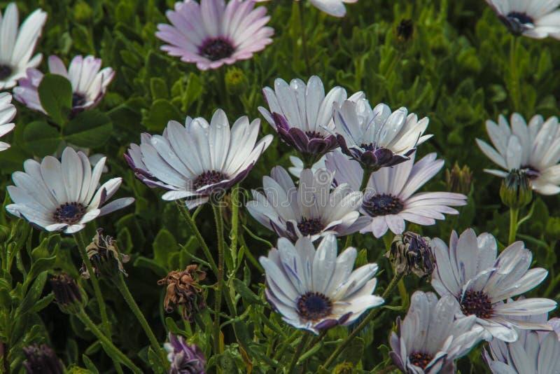 Paquet de fleurs photo stock
