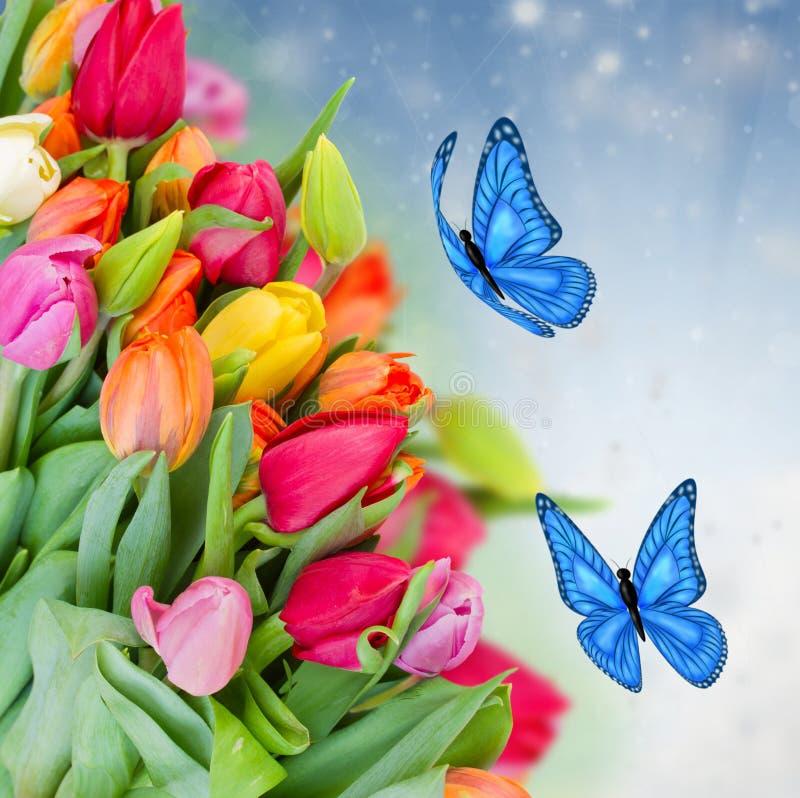 Paquet de tulipes de ressort avec des papillons images libres de droits