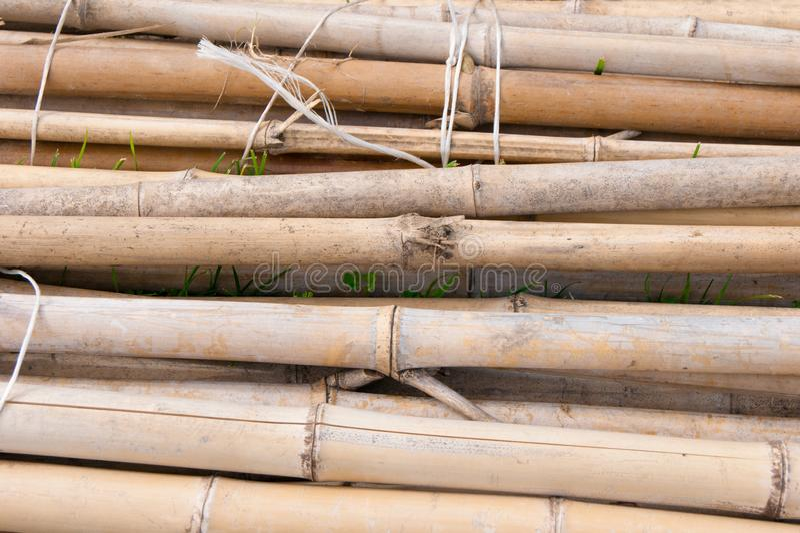 Paquete de bambú secado que miente en la tierra fotos de archivo libres de regalías