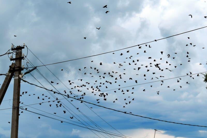Paquete de cuervos negros en el cielo imagenes de archivo