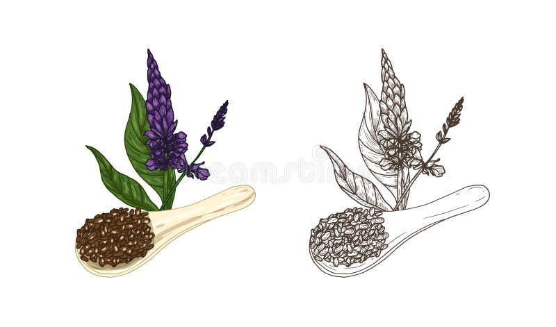 Paquete de dibujos coloridos y monocromáticos de la planta del hispanica de Salvia y de la cucharada de las semillas del chia Pro ilustración del vector
