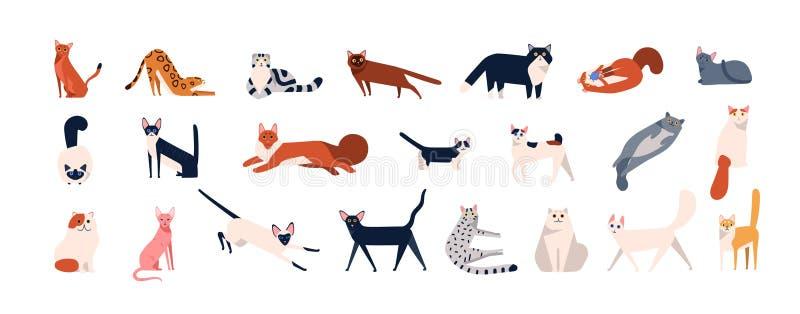Paquete de gatos adorables de las diversas razas que se sientan, mentira, caminando Fije de animales domésticos divertidos lindos stock de ilustración