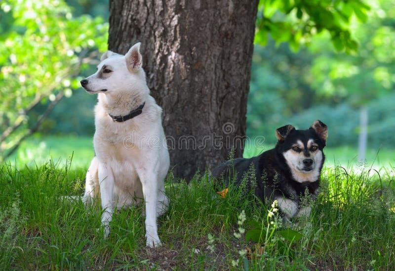 Download Paquete de perros perdidos foto de archivo. Imagen de día - 44853972
