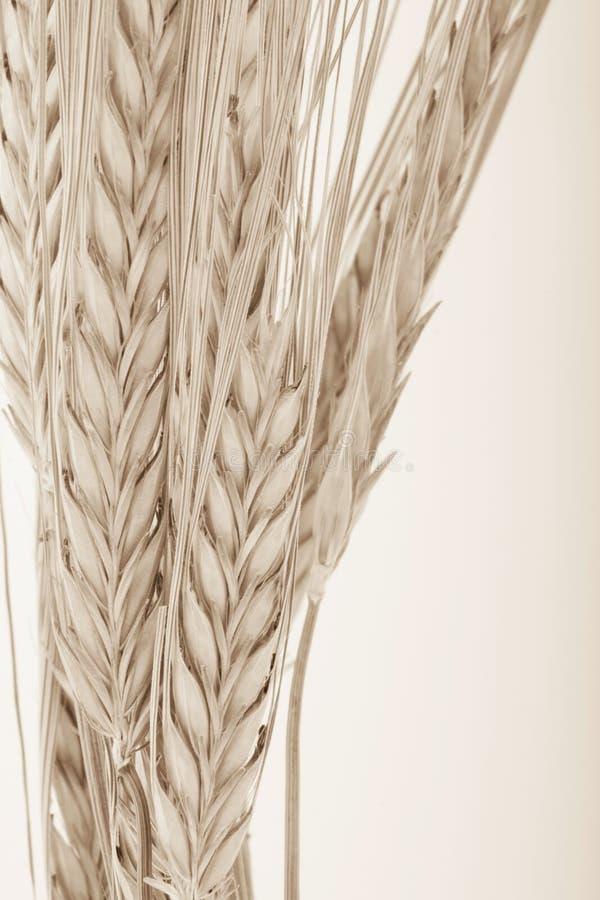Paquete del trigo foto de archivo
