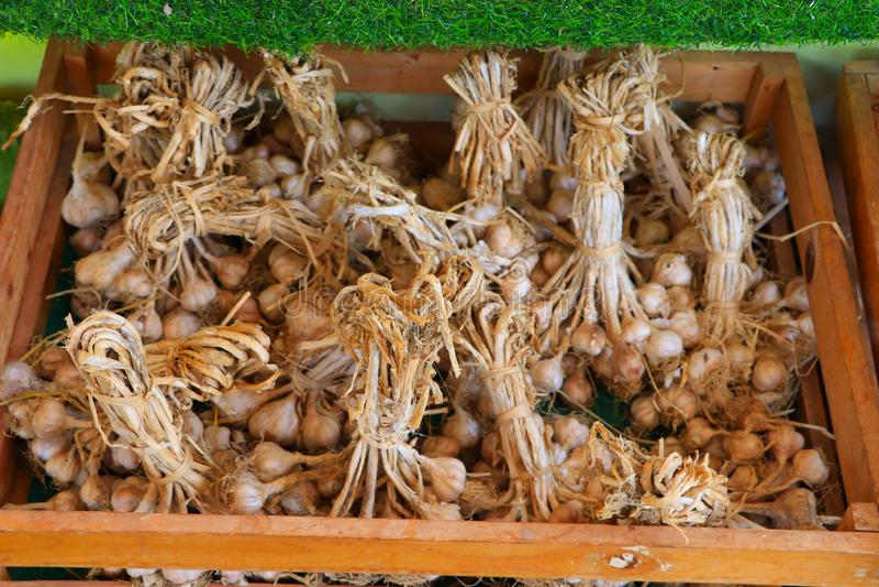 Paquetes de tiendas del ajo o de alium sativum debajo de la vertiente lista para ser entregado para vender en el mercado imagenes de archivo