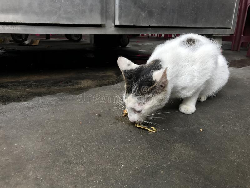 Parásito hambriento Cat Eating Off The Street fotografía de archivo libre de regalías