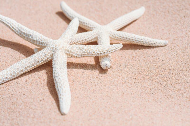 Par av den härliga sjöstjärnan på bakgrund för sandig strand arkivfoto