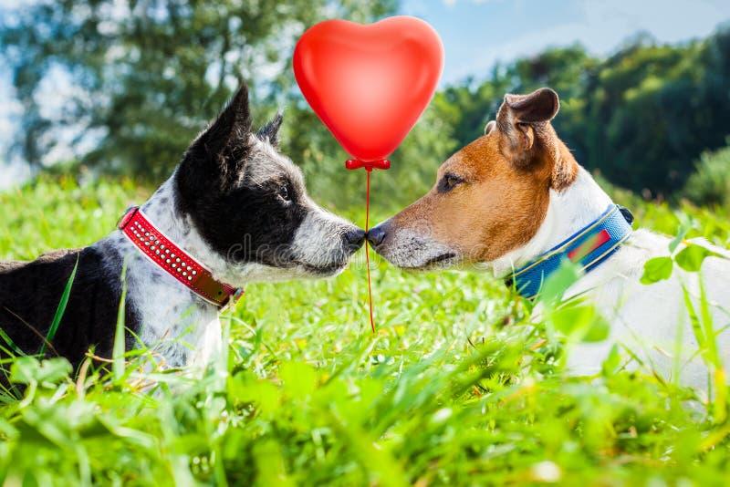 Par av förälskad hundkapplöpning royaltyfri fotografi