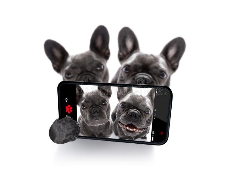 Par av hundkapplöpningselfie arkivfoton