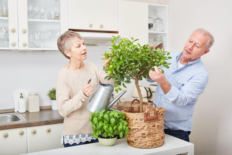 Par av pensionärer som arbeta i trädgården trädet royaltyfria bilder