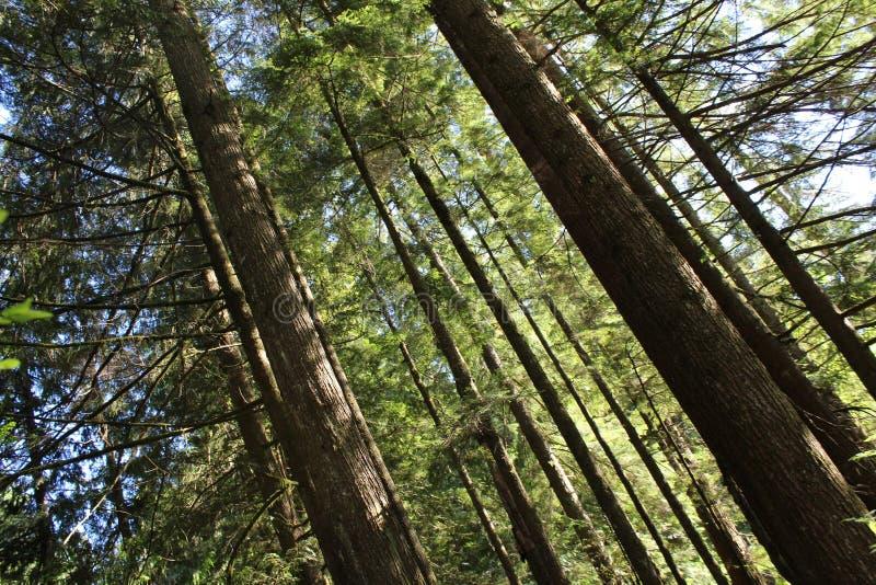 Par la forêt photo stock
