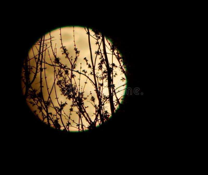 Par la lumière de la lune photos libres de droits