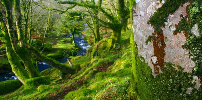Par les arbres image libre de droits