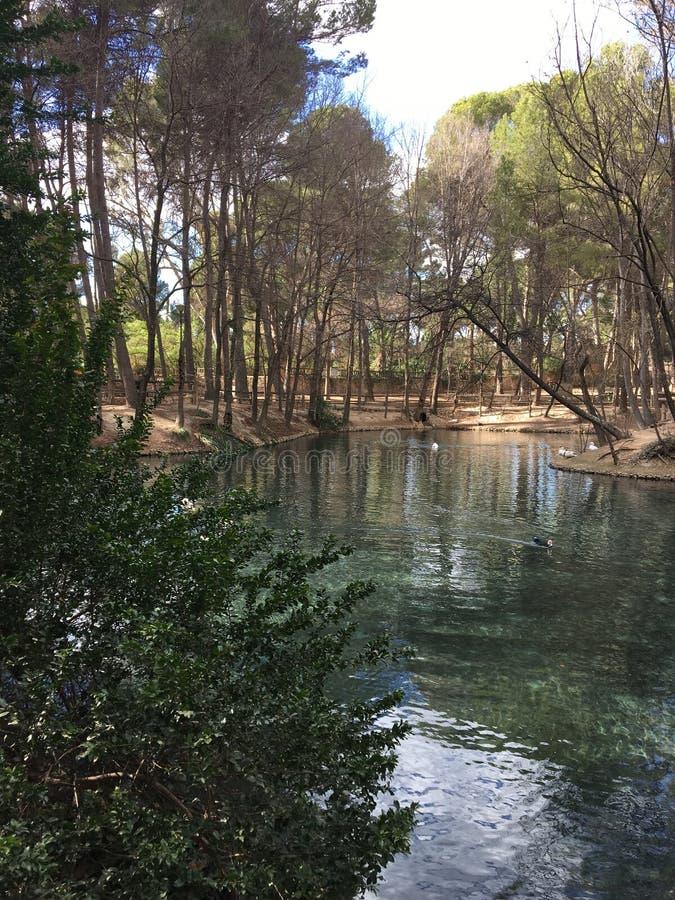 Par les bois, vers la rivière 2 photo libre de droits