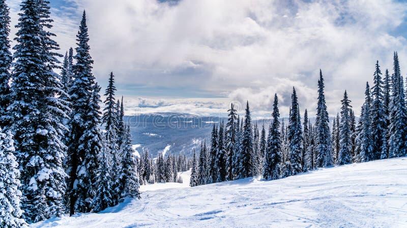 Par neige les arbres couverts et neige profonde emballent sur une descente de ski dans le haut alpin près du village des crêtes d image libre de droits