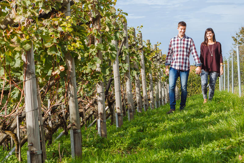 Par som går till och med vingård fotografering för bildbyråer