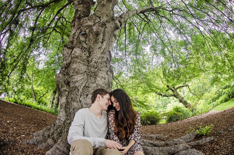 Par som talar under ett stort träd arkivfoton