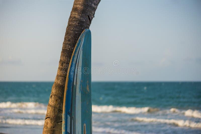 Paraíso do surfista tropical fotografia de stock royalty free