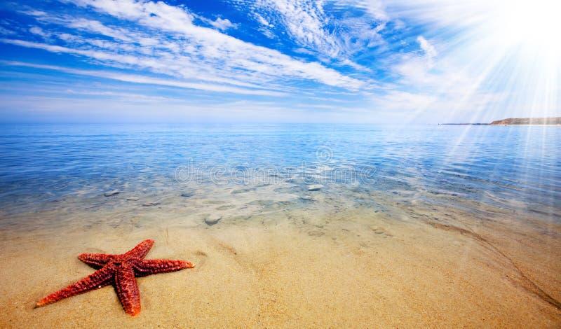 Paraíso dos Starfish imagem de stock