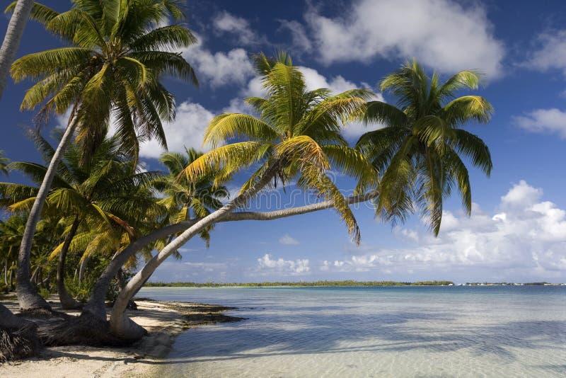 Paraíso tropical de la isla - islas de cocinero