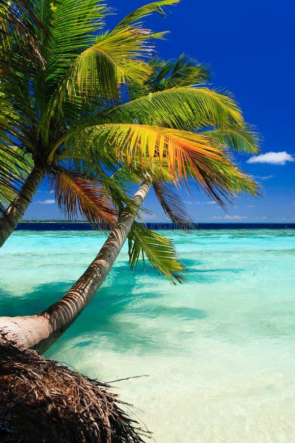 Paraíso tropical en Maldives fotos de archivo