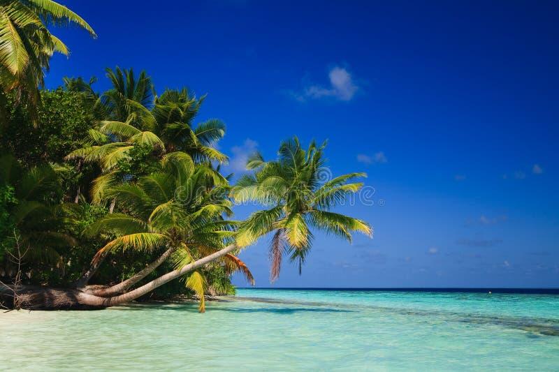 Paraíso tropical en Maldives foto de archivo