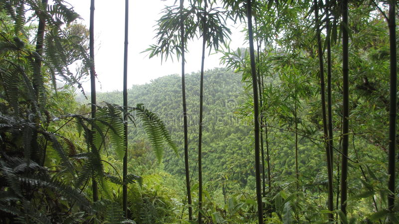 Paraíso verde bonito foto de stock royalty free