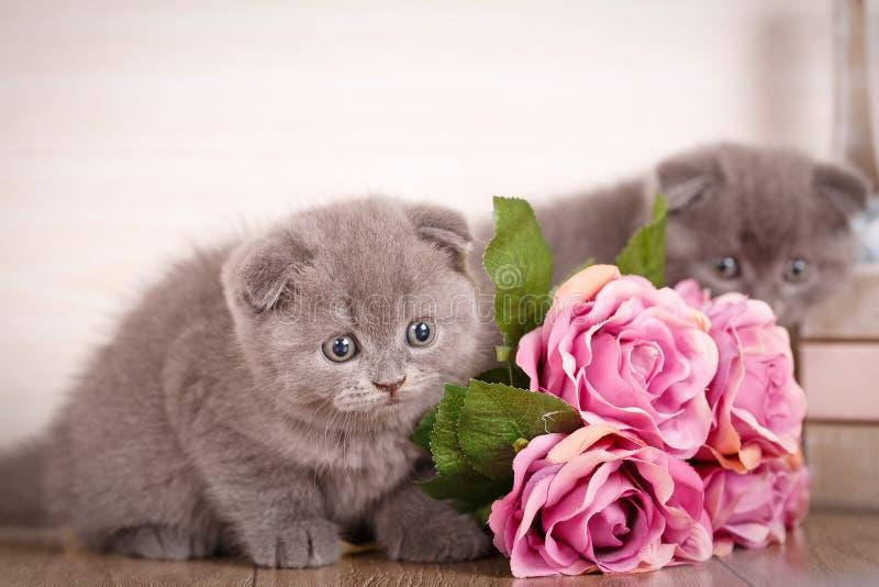 Para śliczni koty blisko bukieta róże obraz royalty free