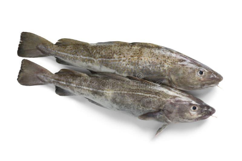 Para świeże surowe dorsz ryby fotografia stock