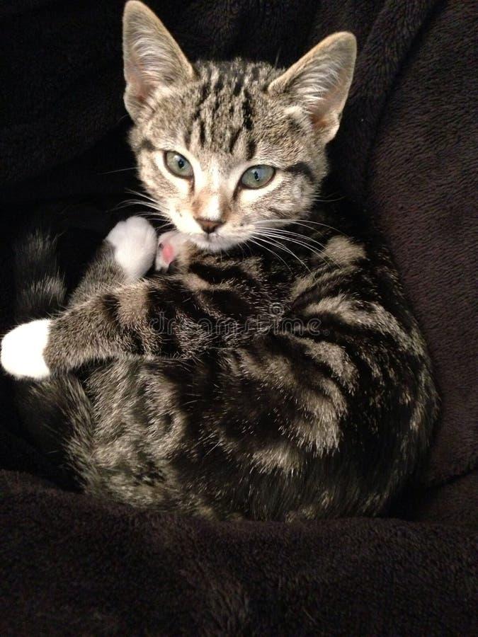 Para arriba encrespado gato foto de archivo libre de regalías