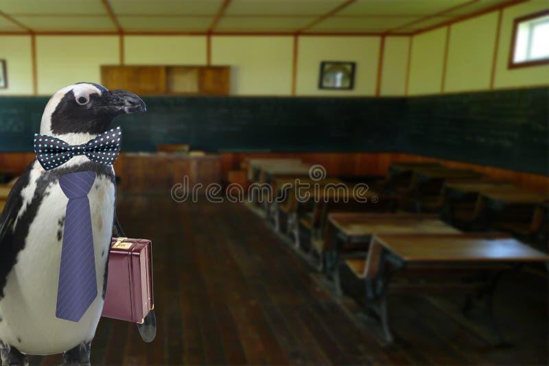 Para arriba vestido profesor divertido del pingüino con la maleta que se coloca en una sala de clase vacía de la escuela fotos de archivo libres de regalías