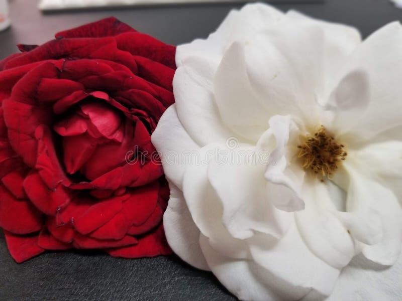 Para av blommor arkivbilder