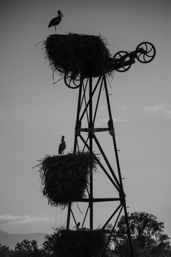 Para av storkar ?ver strukturen royaltyfri bild