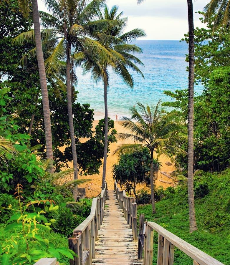 Para baixo escadas de madeira à praia, com palmas ao redor Phuket, tailandês imagens de stock