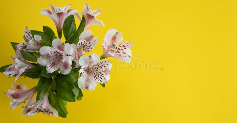 Para białe skarpety dla dzieci z różowymi skarpetami i pięt, z różowymi kropkami na różowym tle, Skarpety dla dziewczyn obraz stock