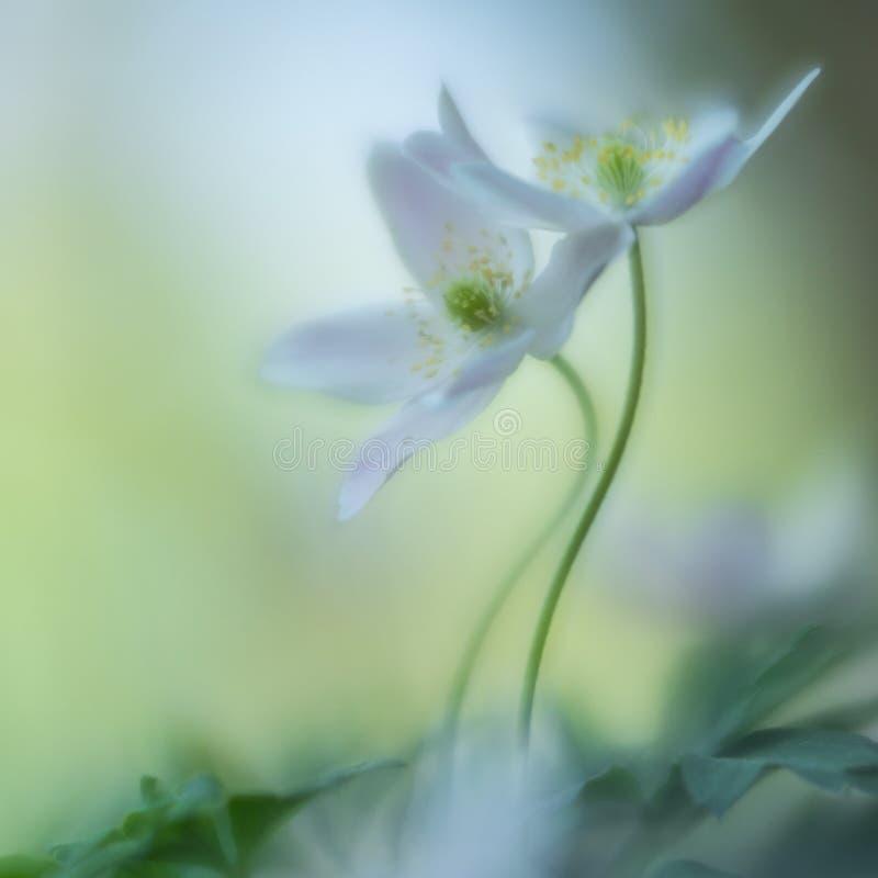 Para biali dzicy kwiaty w miłości ambrace obraz stock