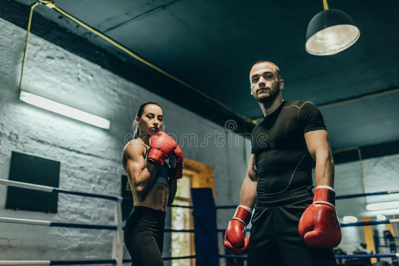 Para boksery zdjęcie royalty free