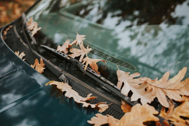 Para-brisa de um carro completamente das folhas caídas imagens de stock royalty free