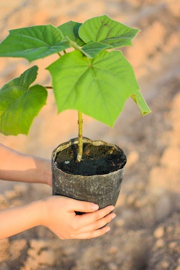 Para começar plantar árvores dos povos imagens de stock royalty free