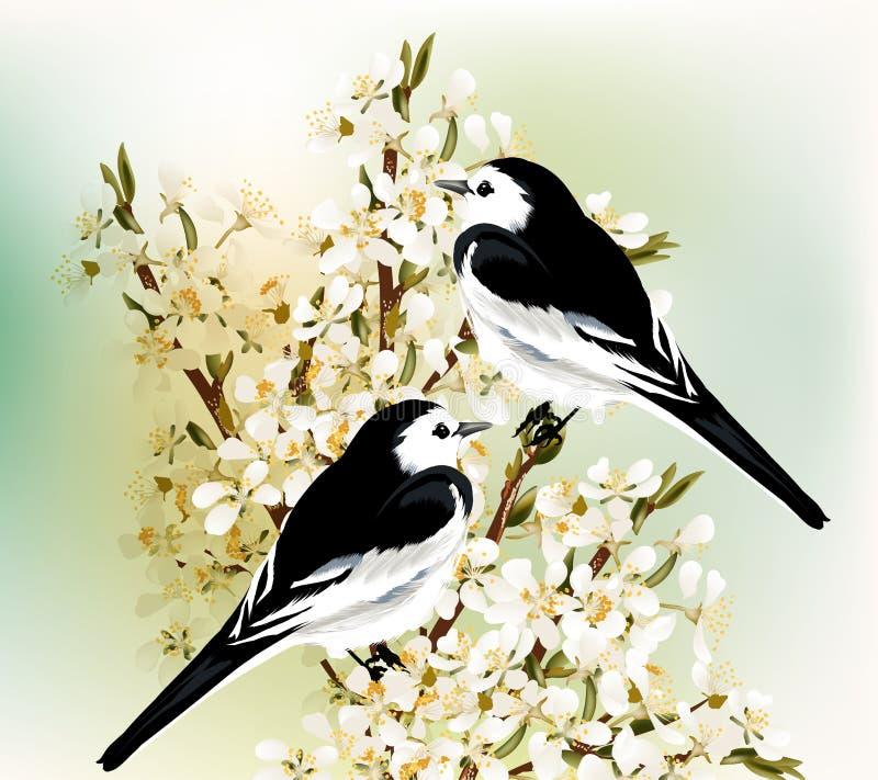 Para czarny i biały ptaki siedzi na wiosna kwitnącym śliwkowym b ilustracja wektor
