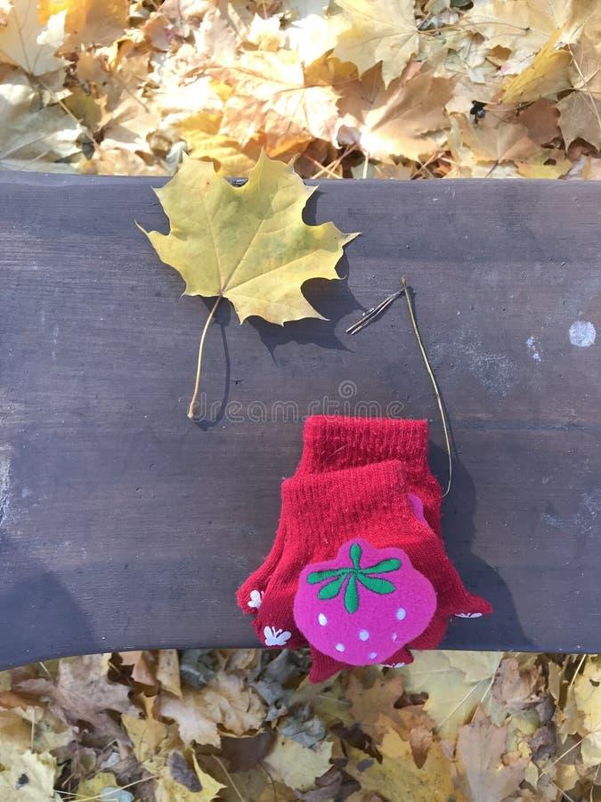 Para czerwone rękawiczki na obfitolistnej ławce w Parma Ohio, PARMA, OHIO - obrazy royalty free