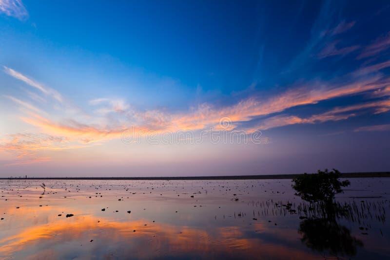 Para a extremidade do dia no pantanal imagem de stock royalty free