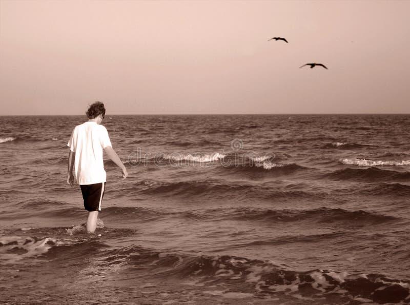 Download Para fora ao mar imagem de stock. Imagem de pássaros, céu - 536261
