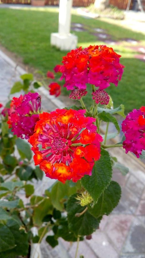 Para fora flores da porta fotografia de stock